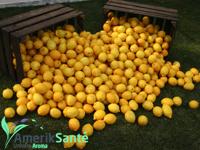 citron_200