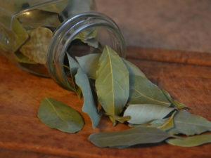 Zoom sur l'huile essentielle de laurier noble